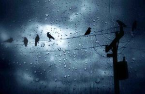 Chùm stt mưa nhớ người yêu  da diết ấn tượng nhất mọi thời đại