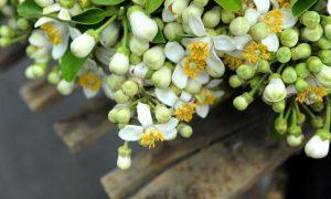 Tổng hợp những bài thơ về hoa đặc sắc câu like khủng