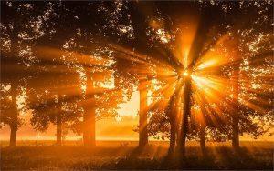 Xao xuyến trước những bài thơ về nắng ấm áp nhất quả đất