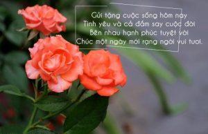 Tuyển tập những lời chúc hay cho người yêu dành tặng các cặp đôi