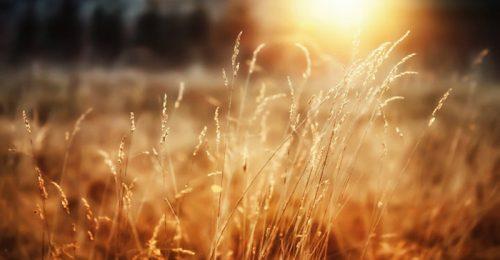 Khám phá những cap thả thính về nắng lay động triệu trái tim