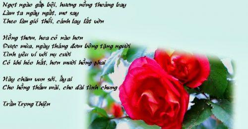 Top những bài thơ về hoa hồng hay, lãng mạn dành tặng lứa đôi