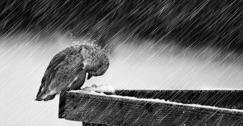 """Chùm thơ buồn về đêm mưa một mình """"gặm nhấm"""" nỗi cô đơn"""