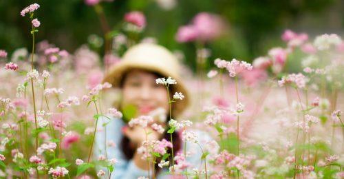 [Tuyển Tập] chùm stt về hoa tam giác mạch rực rỡ cả góc trời