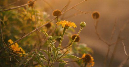 Chìm đắm trong những vần thơ về hoa dại, mỏng manh nhưng mạnh mẽ