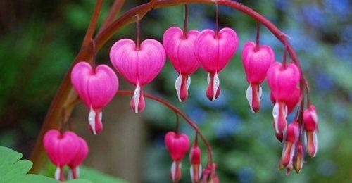 Tổng hợp những hình ảnh trái tim đẹp lãng mạn nhất