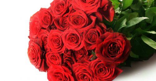 Top 101+hình ảnh hoa hồng đẹp,lãng mạn nhất thế giới