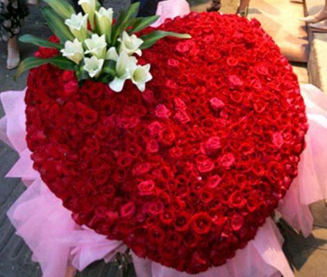 hình ảnh hoa đẹp-15