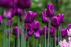 hình ảnh hoa đẹp-23