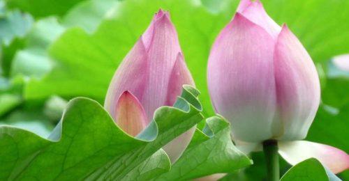 [Top] Hình nền hoa đẹp dành cho Người Mê Hoa! Tải Ngay
