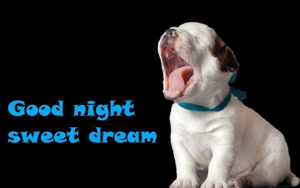 # 119 Hình ảnh chúc ngủ ngon hài hước Hot nhất của giới trẻ