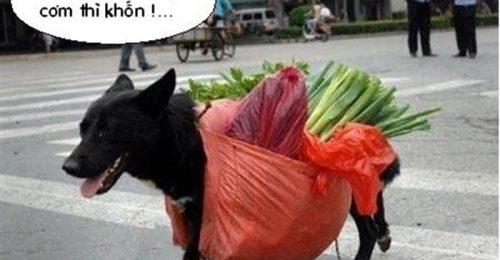 [BST] Hình ảnh hài hước nhất thế giới, càng xem càng cười té ghế