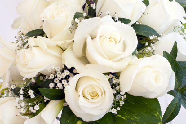 hình ảnh hoa đẹp-19