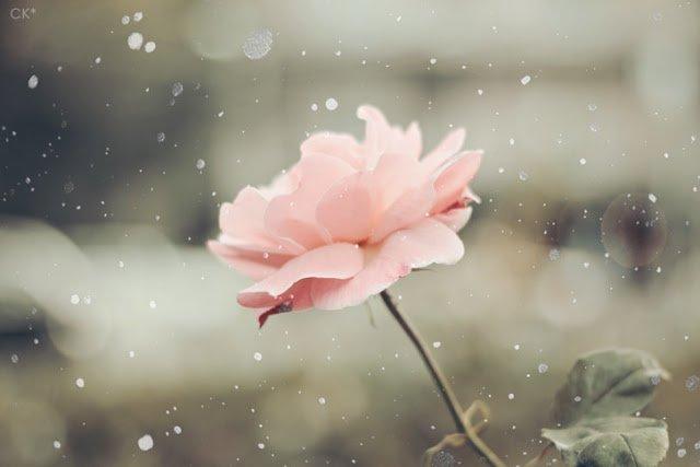 Hình ảnh mùa đông đẹp lạnh lãng mạn-14