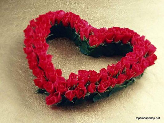 hình ảnh hoa đẹp-17
