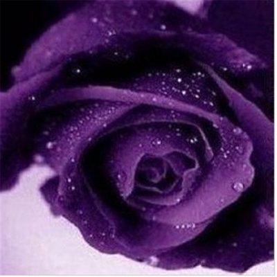 hình ảnh hoa đẹp-20