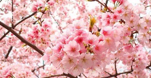 Những stt thả thính mùa xuân, mùa của yêu thương đong đầy