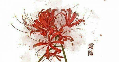101+Hình ảnh hoa Bỉ Ngạn Anime đẹp,chân thực đến không ngờ
